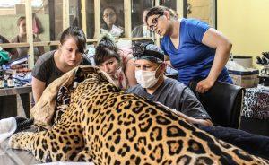 Veterinary Practice in Belize